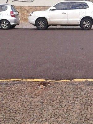 Sinalização fica na esquina da Praça Euclides da Cunha (Foto: Guarda Municipal)