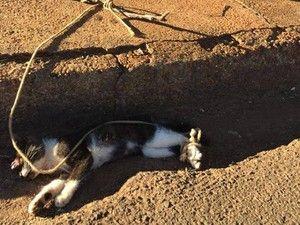 Gato foi encontrado com patas amarradas (Foto: Edmeia Caetano / colaboração)