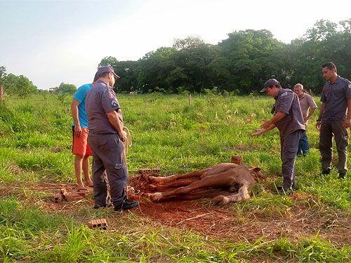 O dono foi localizado e multado pela Polícia Ambiental; a égua não resistiu ao péssimo estado de saúde. Foto: Divulgação