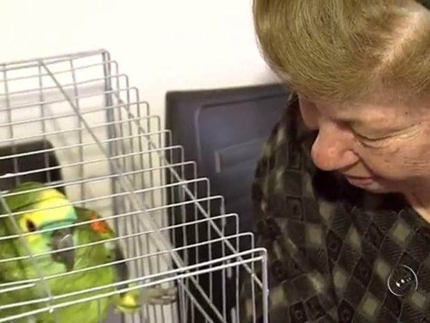 Idosos recuperam guarda de papagaio que vive com eles há 25 anos (Foto: Reprodução / TV TEM )